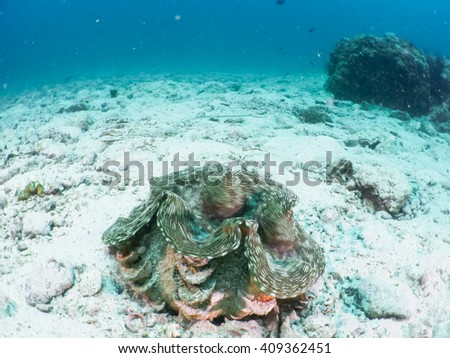 Giant clam Underwater Photos View underwater