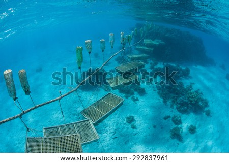 Giant clams are being grown in plastic containers in a lagoon in the Cook Islands. Once the clams reach a certain size they will be removed from the containers and placed on the seafloor to grow. - stock photo