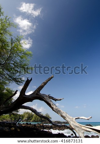 Giant dry trunk at beach 69 - 2, Big Island, Hawaii - stock photo