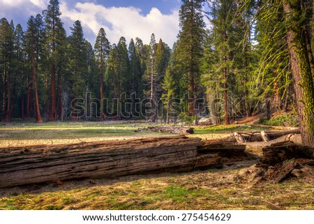 Giant Forest Meadow, Sequoia National Park, California  - stock photo
