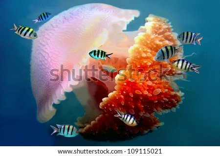 giant jellyfish swimming with tentacles following underwater - stock photo