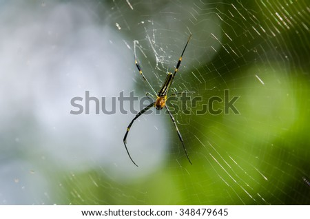 Giant Long-jawed Spider in nature - stock photo
