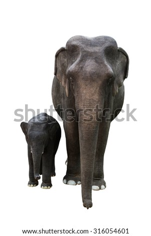 giant plastic mother and baby elephant isolated on white background.