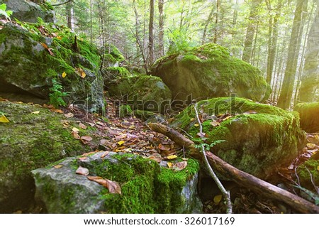 giant rocks covered with moss in the woods of new hampshire - stock photo