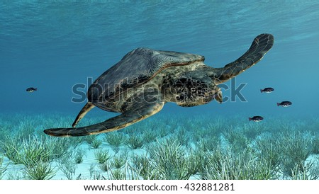 Giant sea turtle Archelon Computer generated 3D illustration