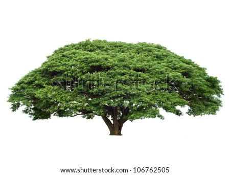 Giant tropical tree isolated on white - stock photo