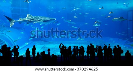 Giant whale shark in Aquarium - stock photo