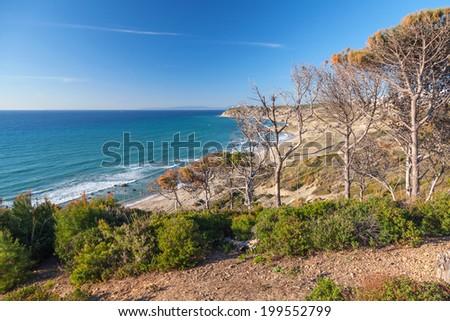 Gibraltar strait, Morocco. Dry pine trees on the coast - stock photo