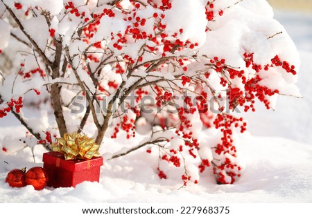 Gift Box and Christmas Balls under Holly Berries bush Covered with Snow. Winter Sunny Day. - stock photo