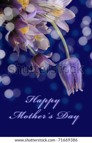 Gift card for mother's day with spring flower on blue background