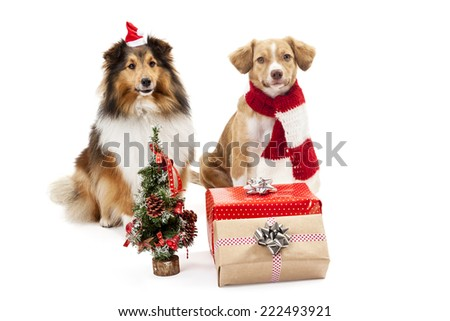 Gifts and christmas tree in front of two dogs over white background - stock photo