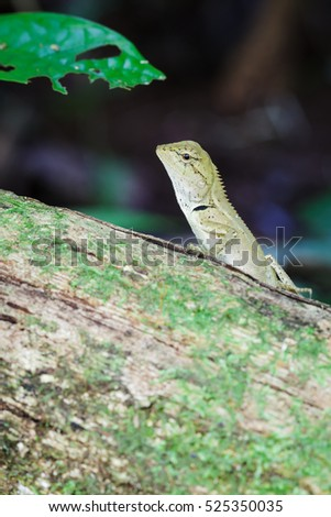 Gila, closeup on wood in tropical forest Asia in Thailand. focus at eyes