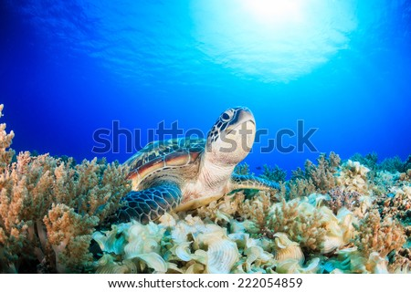 Gili Air - the island with more turtles than people! - stock photo