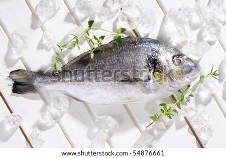 gilt-head bream on ice - stock photo