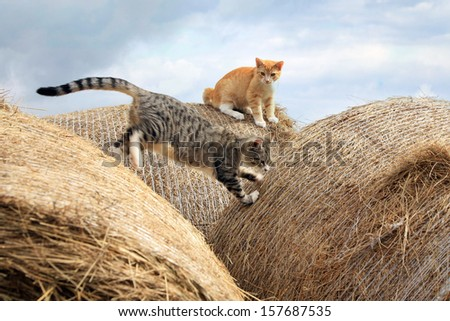 Ginger and grey little cats playing on hay - stock photo