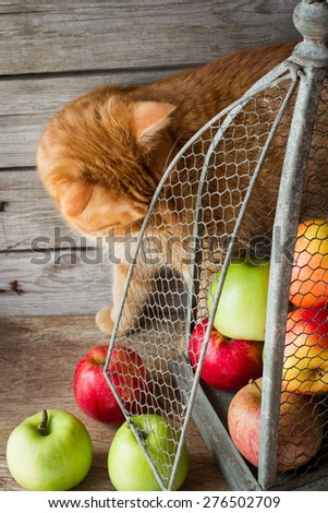 ginger cat and apples in vintage birdcages - stock photo