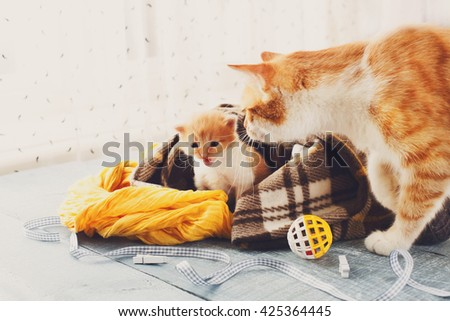 Ginger cat and kitten. Mother cat comes to take kitten to the safe place. Animals, Mom and child, maternity, care. - stock photo