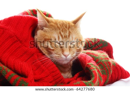 Ginger cat and red sweater - stock photo