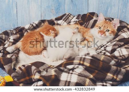 Ginger cat breastfeeding her little kittens. Motherhood, parenting, care. Orange cat nursing kittens at plaid blanket and blue rustic wood background. Kittens suck milk. - stock photo