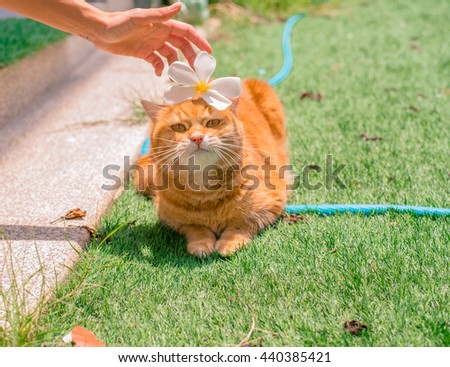 Ginger Cat,Cat in the Green Grass in Summer. Beautiful Red Cat with Yellow Eyes, Cat smelling flowers, Red Cat - stock photo