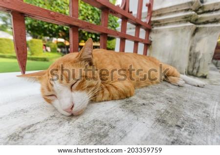 Ginger cat feel relax - stock photo