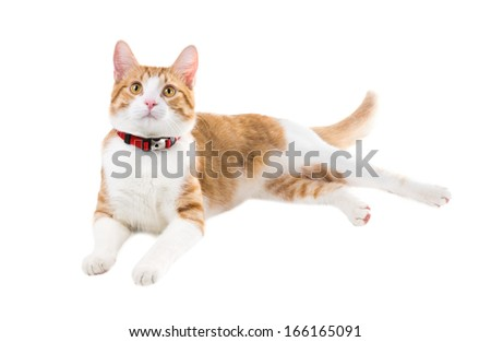 Ginger cat in a red collar lying on a white background