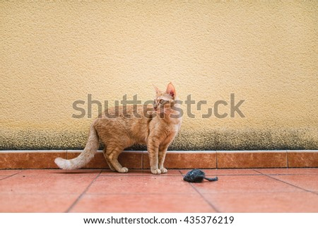 Ginger cat in a terrace at home.
