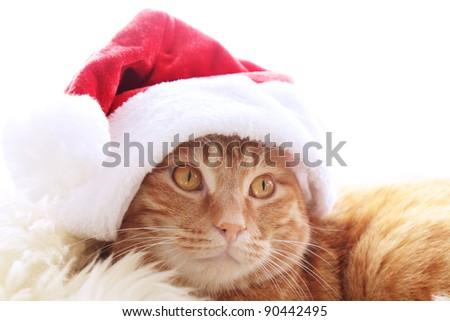 Ginger cat in christmas cap - stock photo