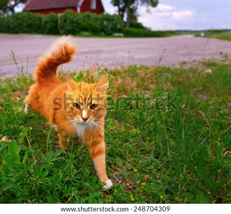 Ginger cat in grass hunting nearby country road - stock photo