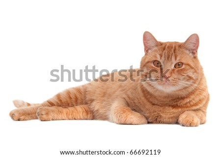 Ginger cat is having a rest - stock photo