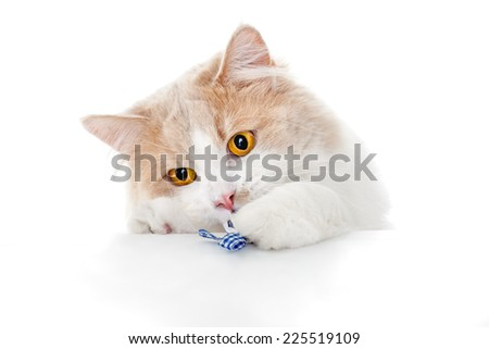 Ginger Cat isolated over white background. - stock photo