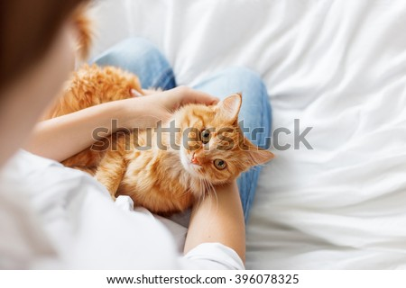 Ginger cat lies on woman's hands. The fluffy pet comfortably settled to sleep or to play. Cute cozy background with place for text. Morning bedtime at home. Soft focus. - stock photo