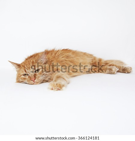 cat scratching but no fleas