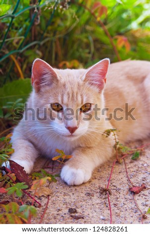 Ginger cat lying in autumn leaves - stock photo