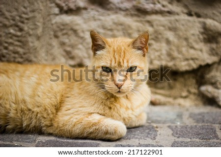Ginger cat on the street in France - stock photo