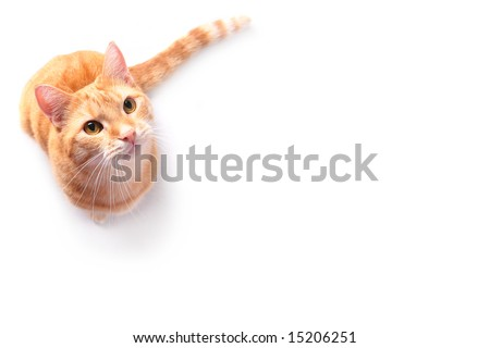 ginger cat on white background - stock photo