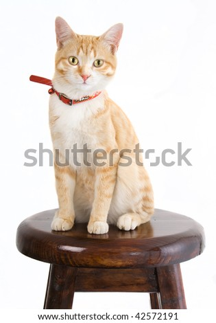 Ginger cat on wooden chair - stock photo