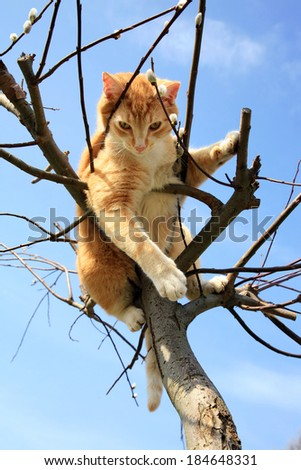 Ginger cat sitting on a willow. Spring. - stock photo