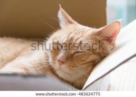 Ginger cat sleeping in cardboard box