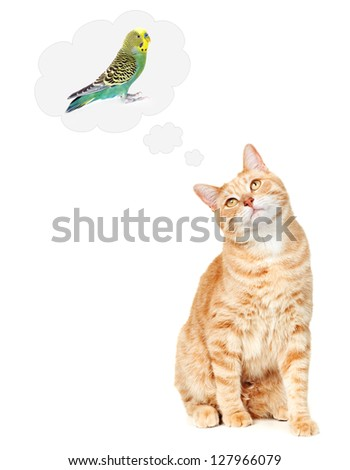 Ginger Cat thinking about bird isolated on white background. - stock photo
