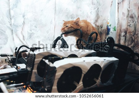 Ginger Cat Tries Bite Wires On Stock Photo (Download Now) 1052656061 ...