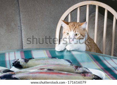 Ginger cat wants to steal fish