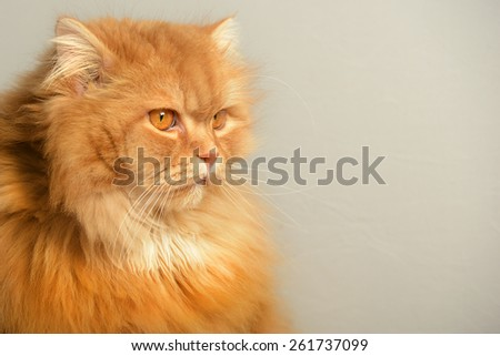 Ginger cat with attitude - stock photo
