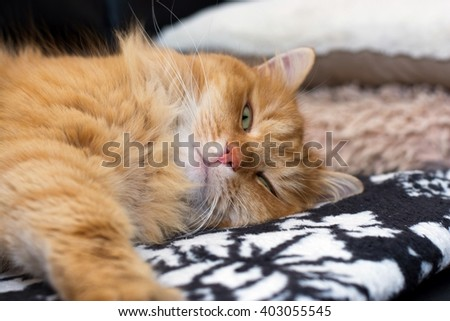 Ginger cute cat sleeping at home - stock photo