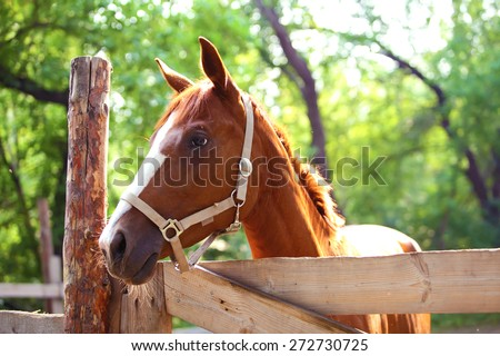 Ginger horse on farm. Outdoors - stock photo