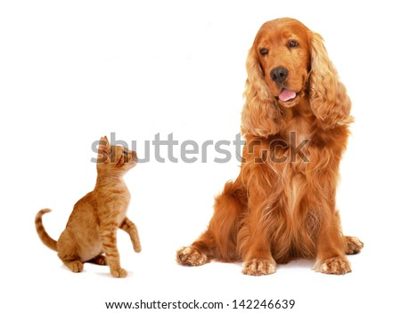 Ginger kitten and dog sitting and looking at each other isolated on white background.