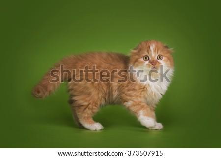 Ginger kitten isolated on green background - stock photo