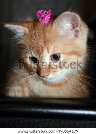 Ginger kitten with a bow on her head looking down - stock photo