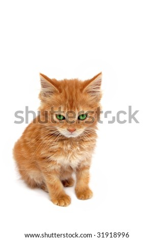 Ginger kitten with green eyes and an evil look on its face over white background.