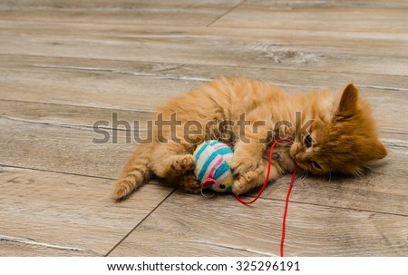 ginger kitty with blue eyes - stock photo